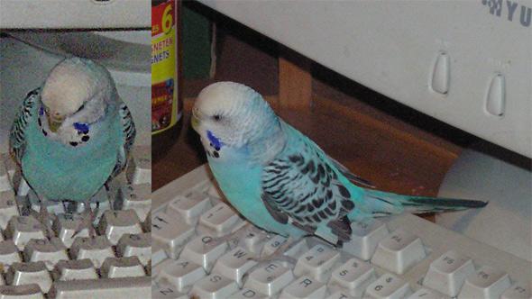 birdy!